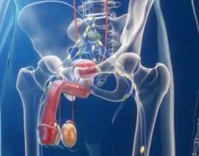 Детально про симптоми простатиту у чоловіків і проявах хвороби фото