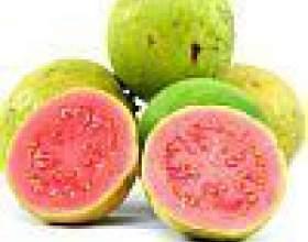 Фрукт гуава - корисні властивості, калорійність, як їдять фото