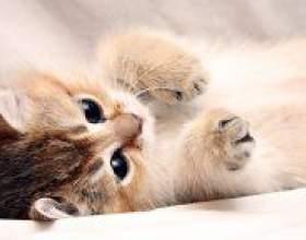 Як можна назвати кота? фото