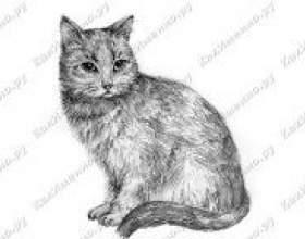 Як намалювати кішку олівцем? фото