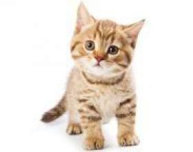 Як назвати кошеня хлопчика? фото