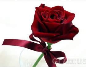 Які квіти можна подарувати чоловікоⳠфото