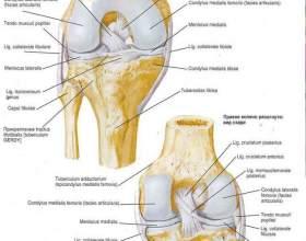 Колінний суглоб: хвороби і лікування фото