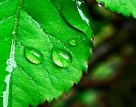 Косметика зі стовбуровими клітинами рослин фото