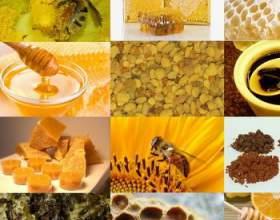 Лікування продуктами бджільництва: пергою, пилком і маточним молочком фото