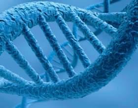 Знайдений ген здатний уповільнити старіння організму фото