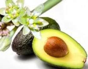 Особливості авокадо - калорійність, користь і шкода, способи застосування фото
