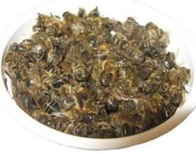 Чи допоможе бджолиний підмор в лікуванні аденоми простати? фото