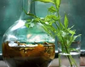 Рецепт і застосування настойки чистотілу на горілці фото