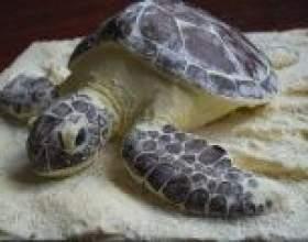 Торт черепаха - рецепти з покроковим приготуванням фото