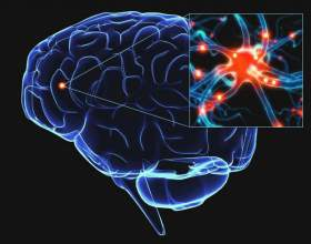 Вчені з монреаля з`ясували, що мозок людини починає працювати після 55 років фото