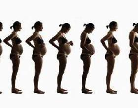 Живіт при вагітності фото